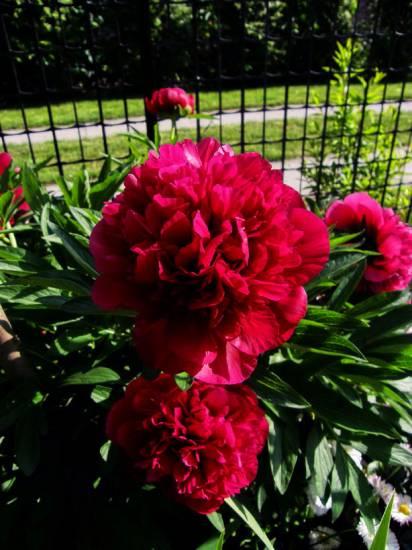 Квіти фото квітів все про квіти